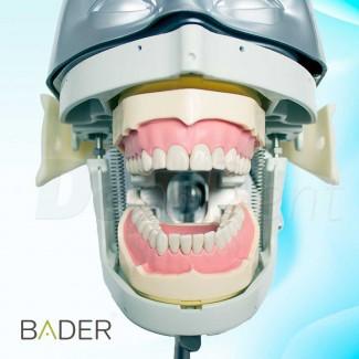 Articulador para coronas y puentes dorado