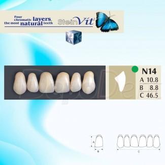 Dientes acrílicos ESTEINVIT 4 capas cromáticas molde N24B
