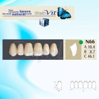 Dientes acrílicos ESTEINVIT 4 capas cromáticas molde L2